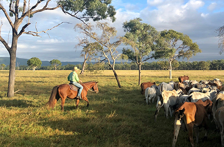 Producer case study: Rob and Ainsley McArthur, Northern Queensland