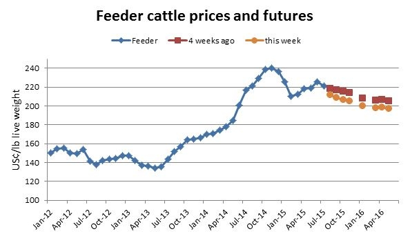 US-buyer-feeder-cattle.jpg