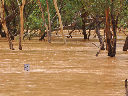 Resources for producers affected by flooding in North West Queensland