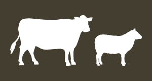 Become a registered MSA beef or sheep producer