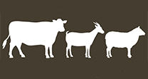 Cattle Goat & Sheep icon