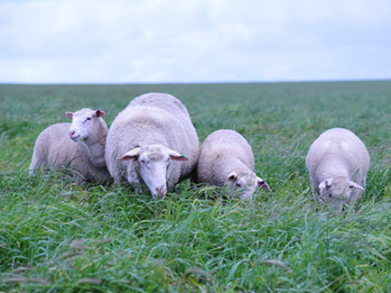 It's Ewe Time: forums focus on lifting productivity and profitability