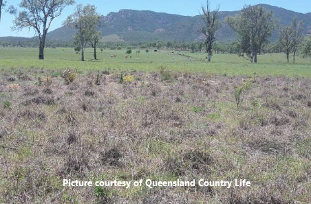 Investigative works progress into pasture dieback in Qld