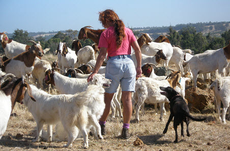 Applications open for new goat industry advisory group