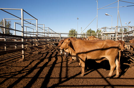 Rain delivered some upside to the cattle market, but will it last?