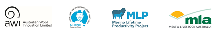 merino-project.png
