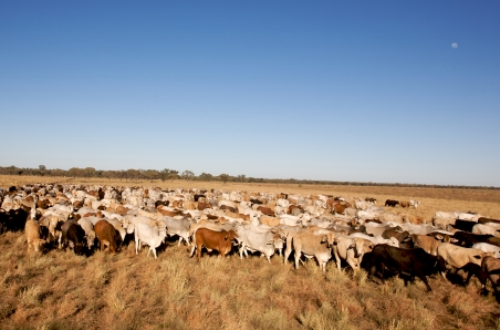 Dry conditions continue to drive red meat exports