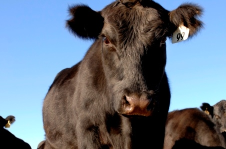 US Imported beef prices higher once again