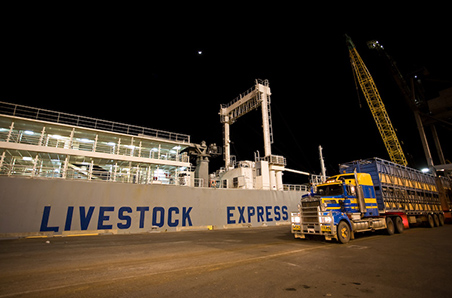 Mixed bag for live exports year-on-year