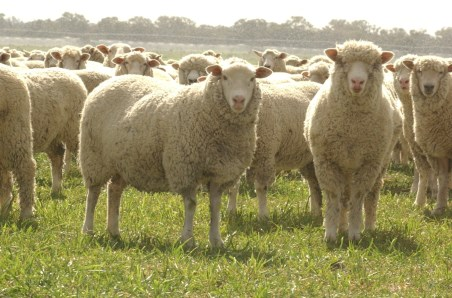 Know the numbers – NZ sheepmeat production outlook