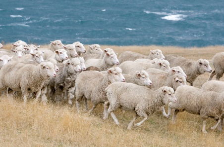 Short trading weeks see lamb prices ease
