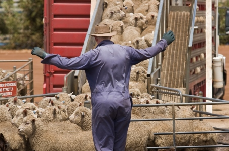 Lamb prices bounce back