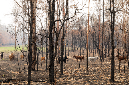 Managing livestock after a fire